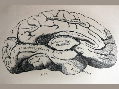 associazione di neurologi