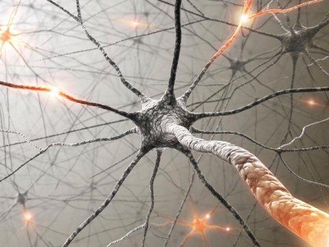 studi di neurologia