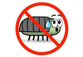 Risultati immagini per immagini blatte insetti