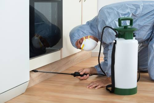 Spraying pesticide on wooden cabinet of kitchen