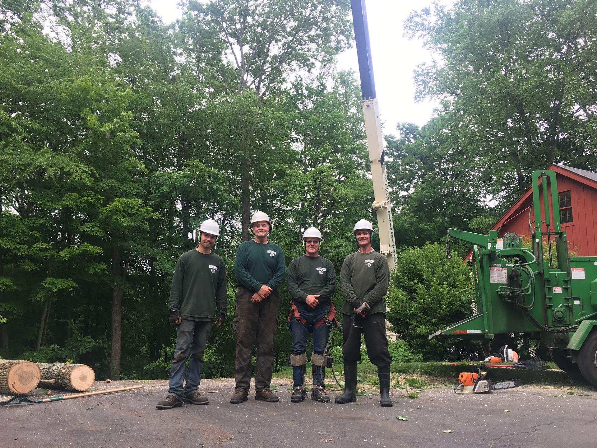 tree service Bethel, CT
