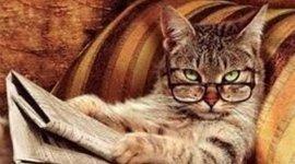 Sabbie per lettiere, lettiere gatti, prodotti di marca