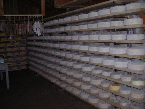 Vendita attrezzature per la stagionatura formaggio