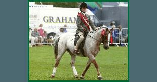 Horse riding services - Sudbury, Suffolk - Twinstead Riding School  - White Horses