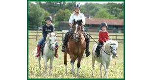 Horse riding services - Sudbury, Suffolk - Twinstead Riding School  - Horses