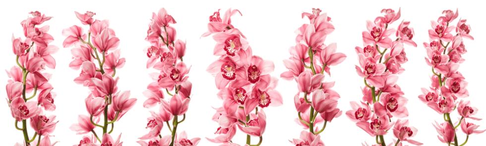 composizioni_fiori_freschi