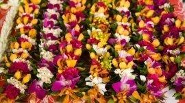 piante_di_fiori