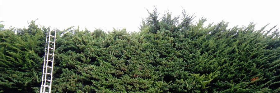 Tree lopping in Wellington