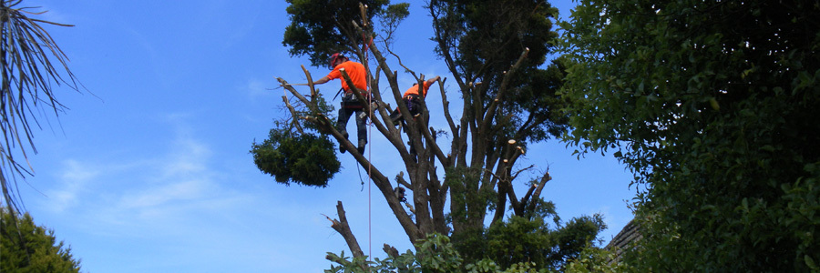 Tree cutting service in Wellington