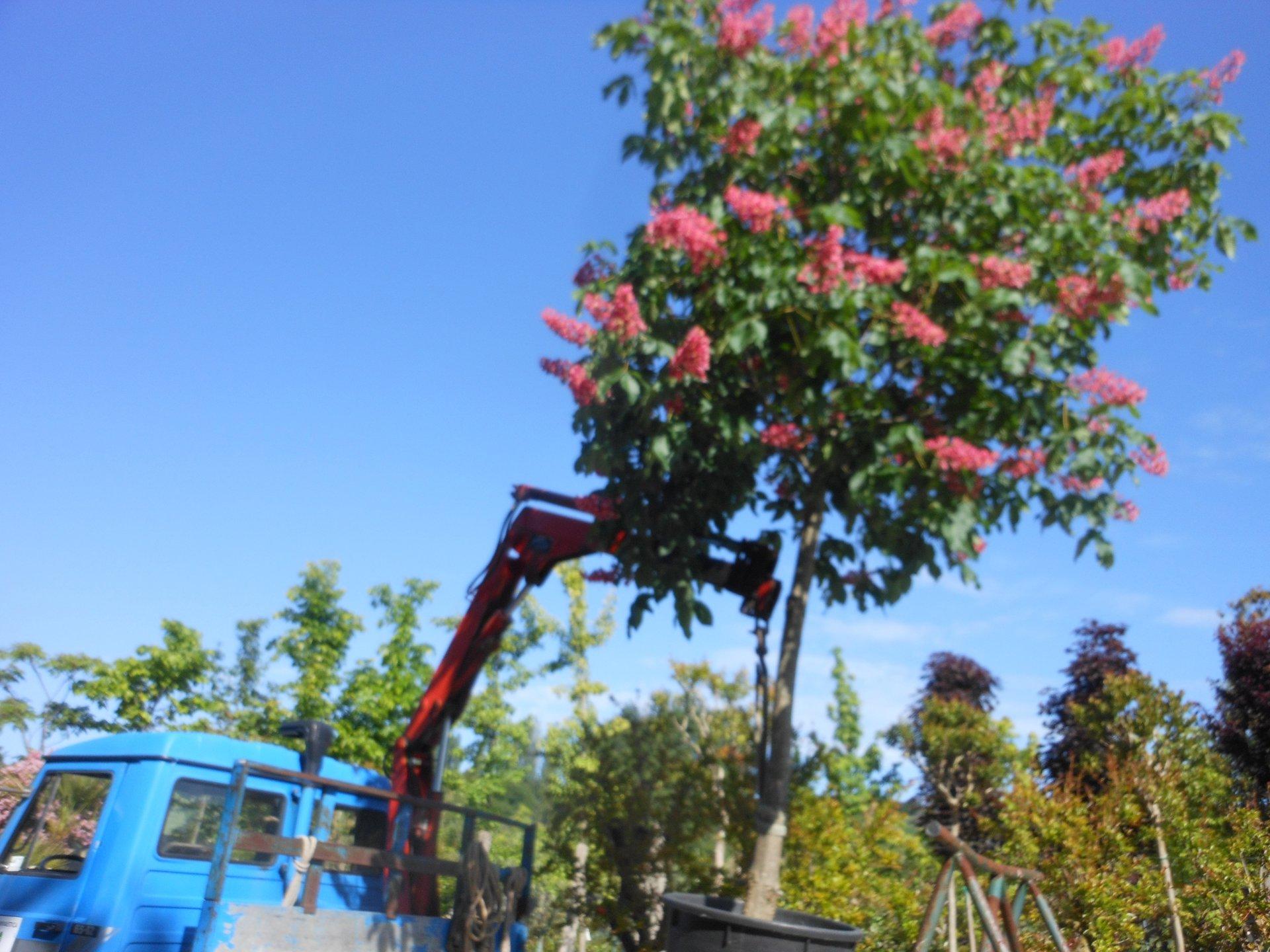 Piante da giardino alto fusto - Migliori alberi da giardino ...