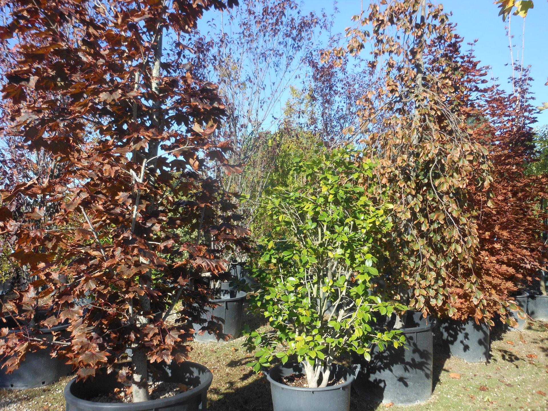 Manutenzione giardini pesaro pu vivaio verde mondo - Piante alto fusto da giardino ...