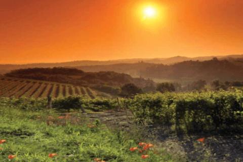 vitigni tramonto