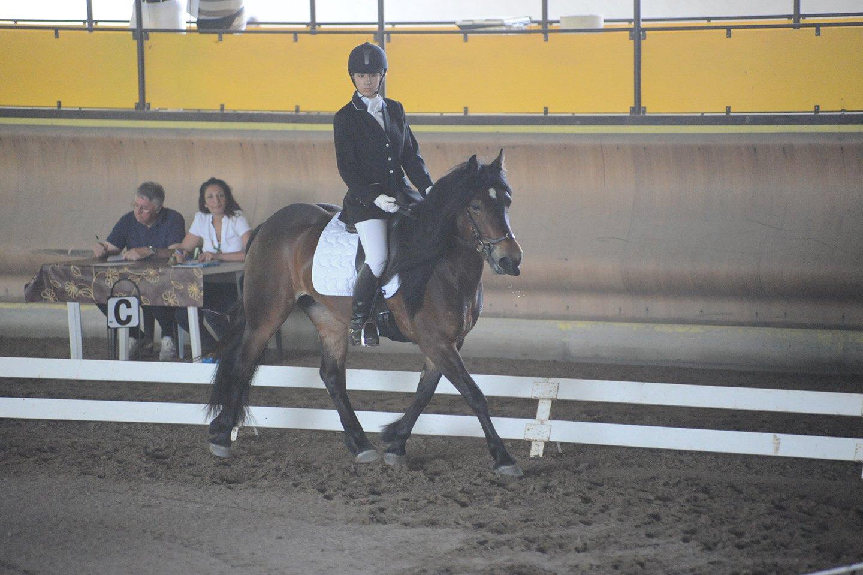 gara di equitazione con giuria