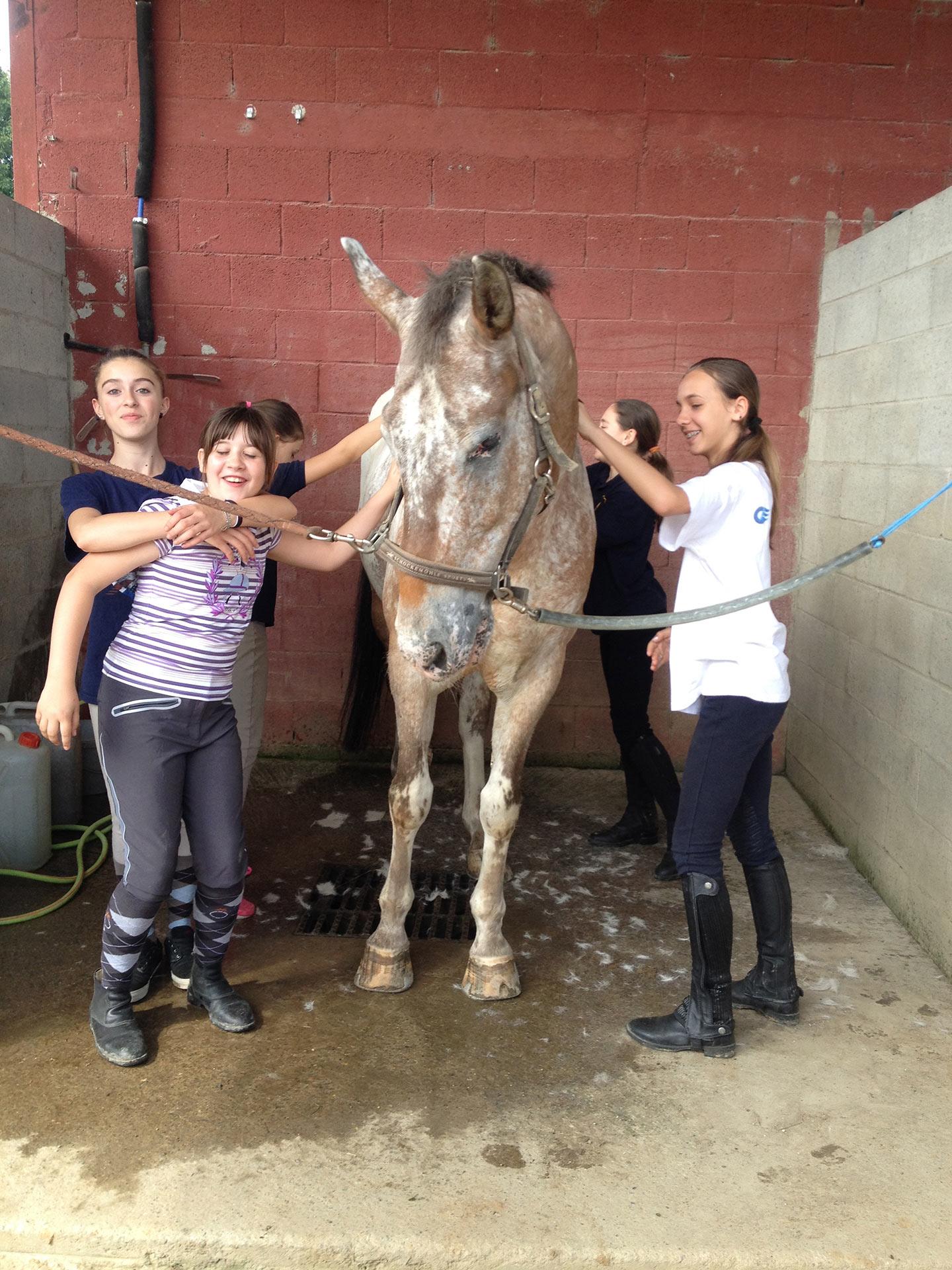 bambini che puliscono ed accarezzano un cavallo