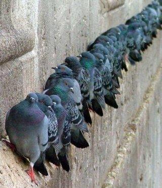 allontanamento uccelli