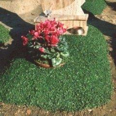 Servizi floreali per funerali