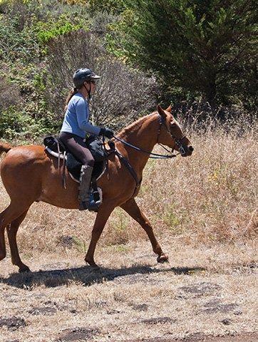 una ragazza su un cavallo