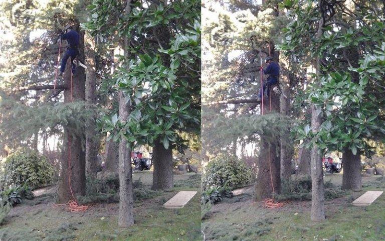 Potature con tree climbing