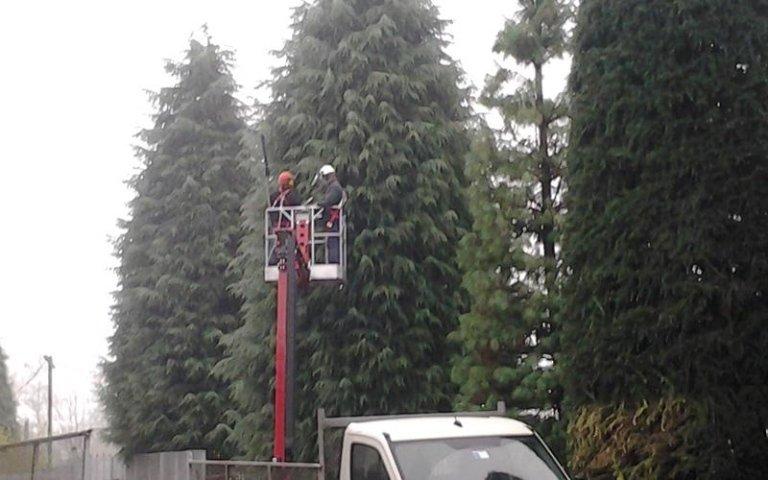 Servizi di potatura alberi