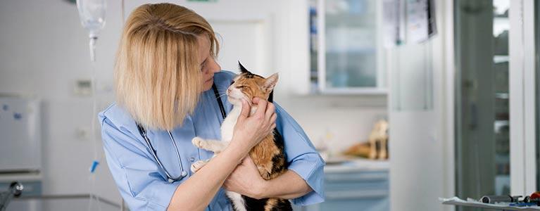 moruya animal hospital doctors holding the cat