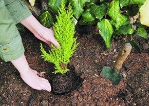Garden maintenance - Lisburn, County Antrim - John Wallace Landscaping - Planting