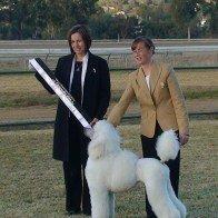 show dog event