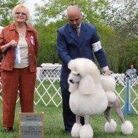 show dog winner