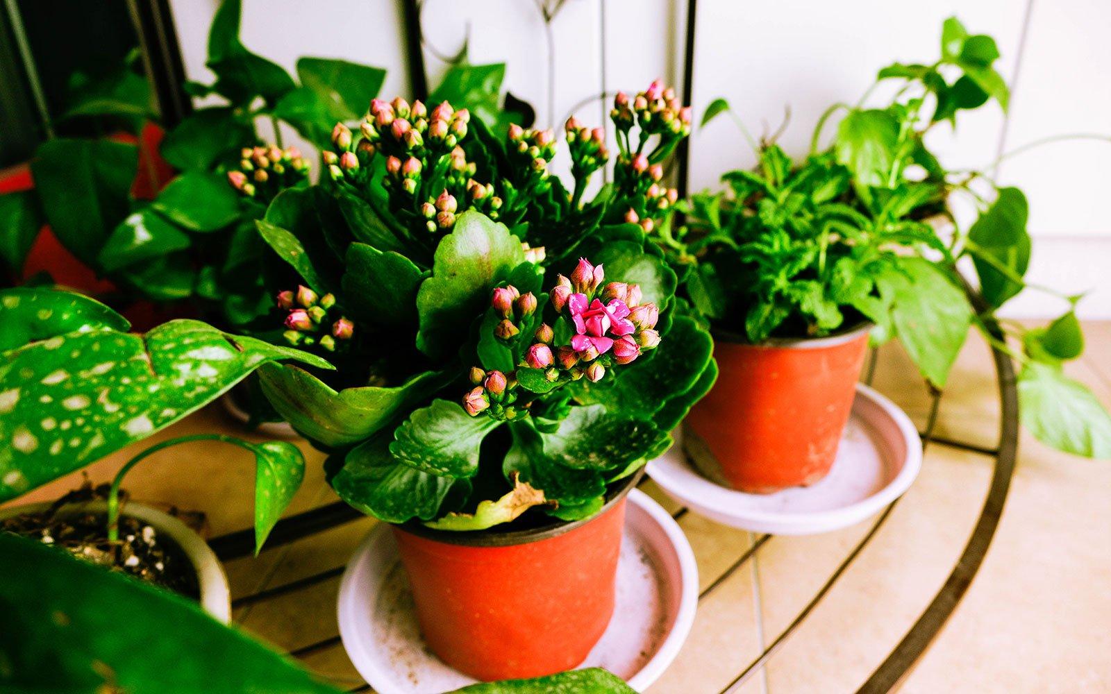 Un insieme di vasi con delle piante