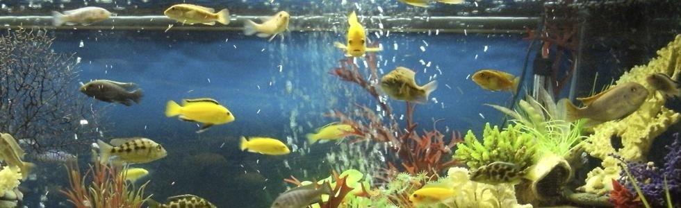 Piante acquatiche Spresiano