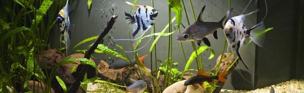 Vendita pesci acquari Spresiano