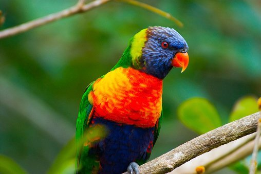 sunlover lodge rainbow lorikeet