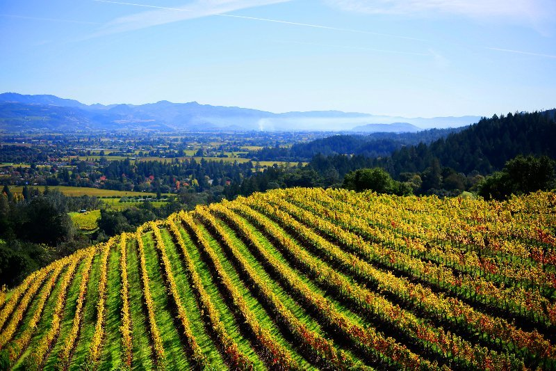 napa valley wine tour from San Francisco