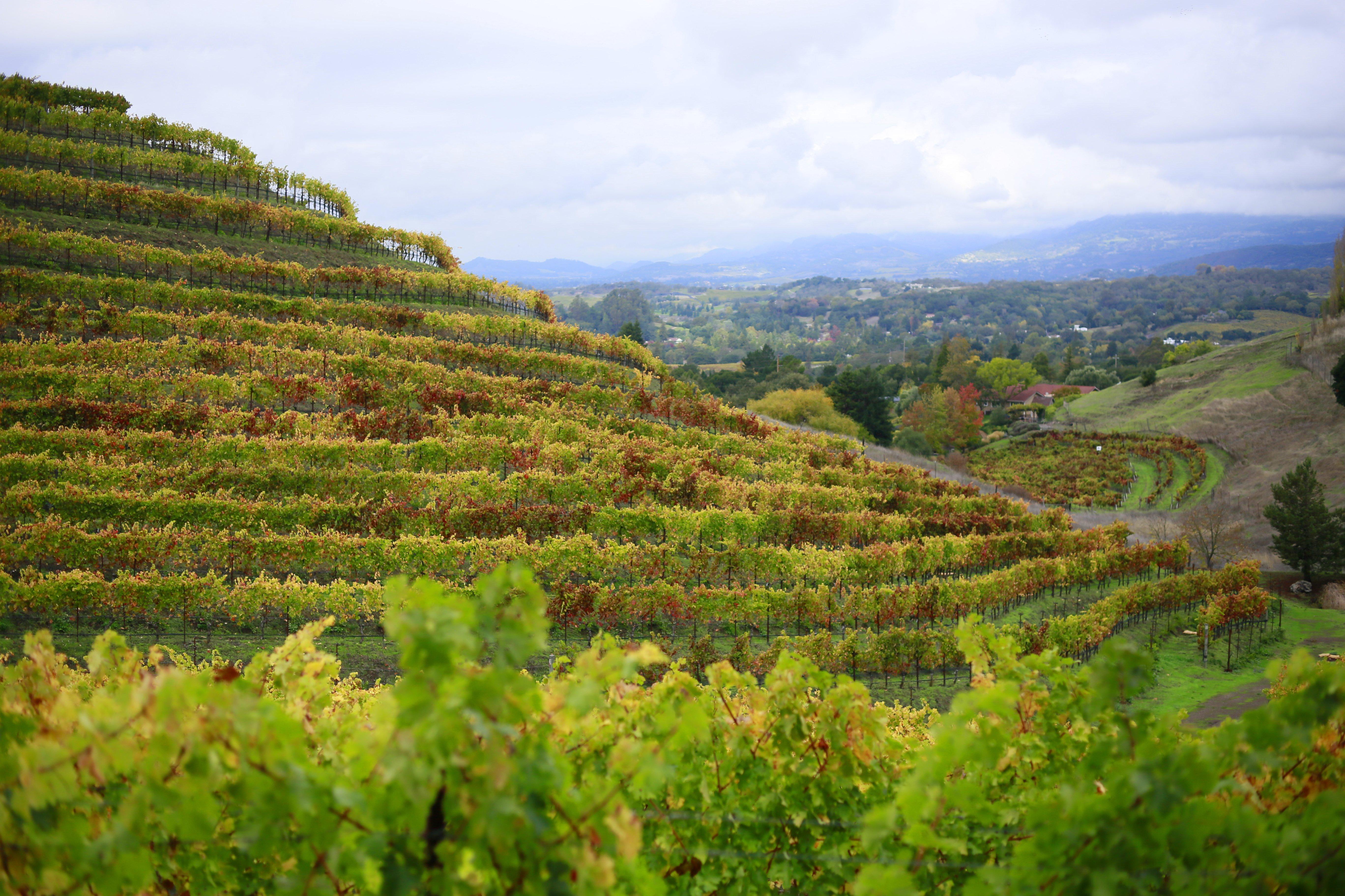 best Napa wine tours