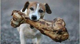 cane con osso