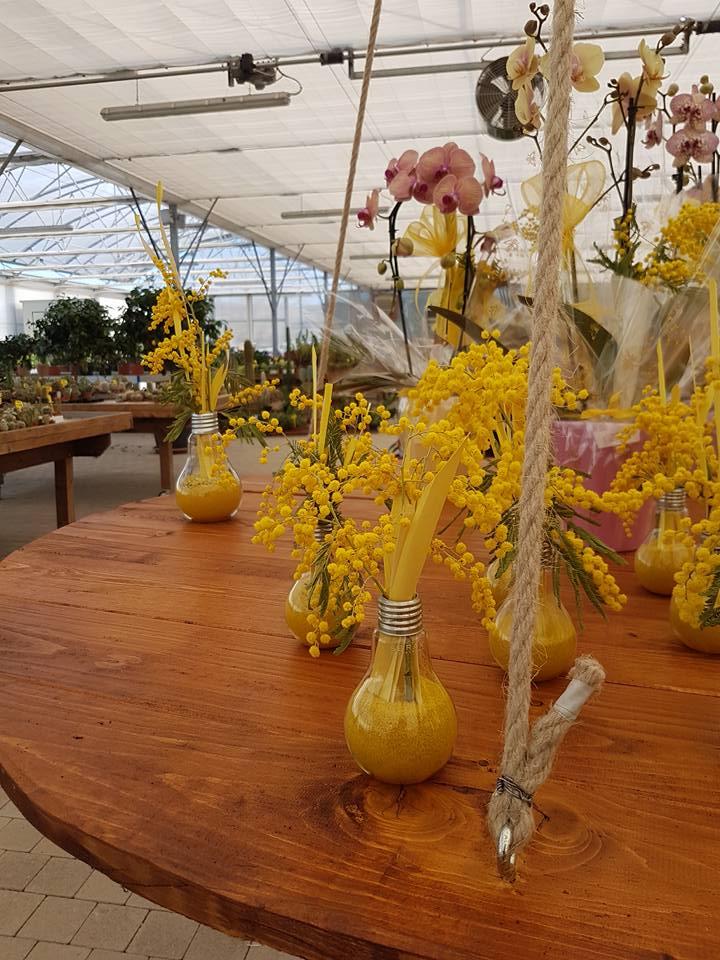 Vasi di mimosa