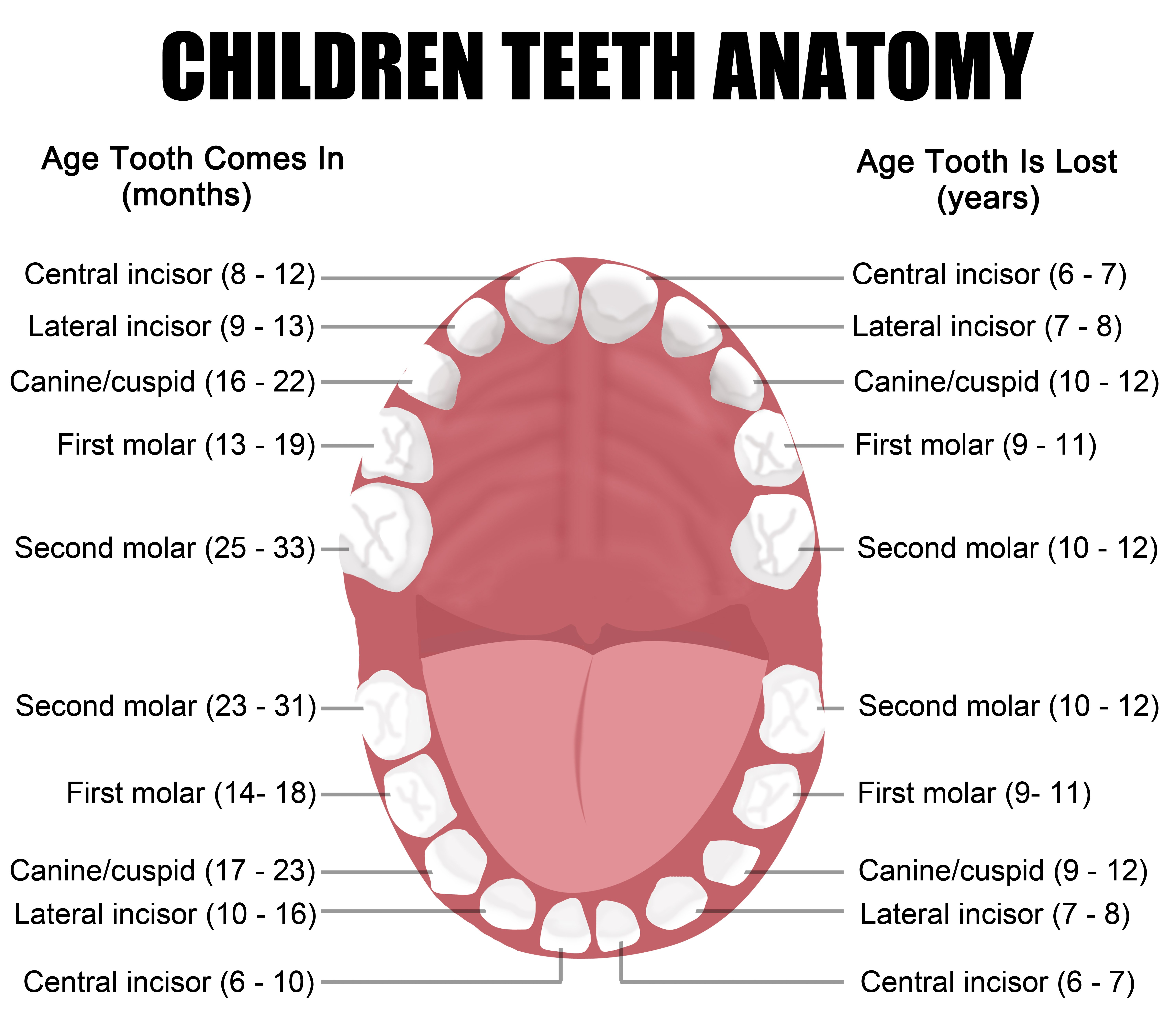 We offer dental services to children at all ages in Anchorage