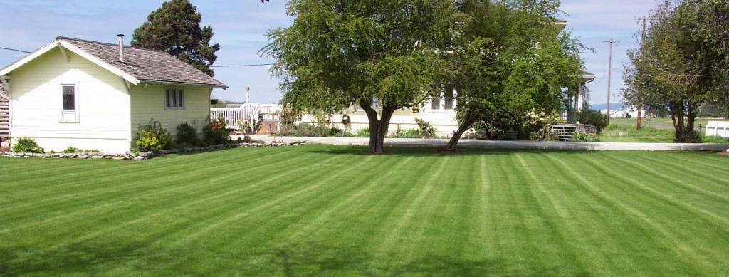 yard maintenance for hydroseeding