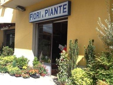 onoranze funebri bibbiena, fiori piante bibbiena