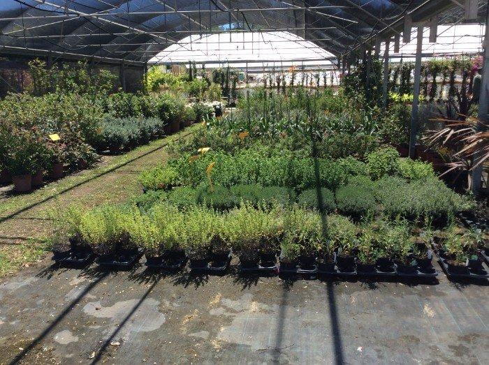 Varietà di piante verdi e alberi giovani