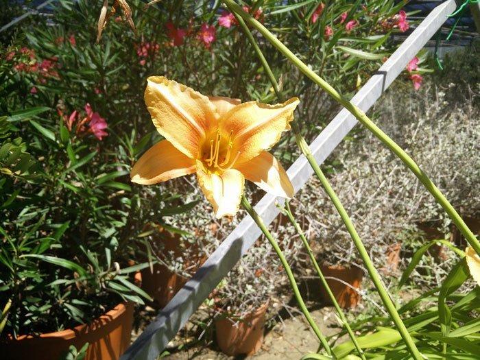 un fiore giallo in un vivaio