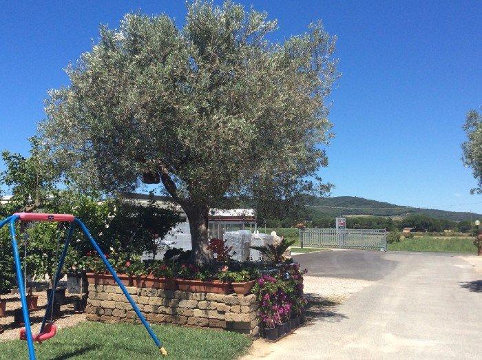 Altalena  vicino l'albero