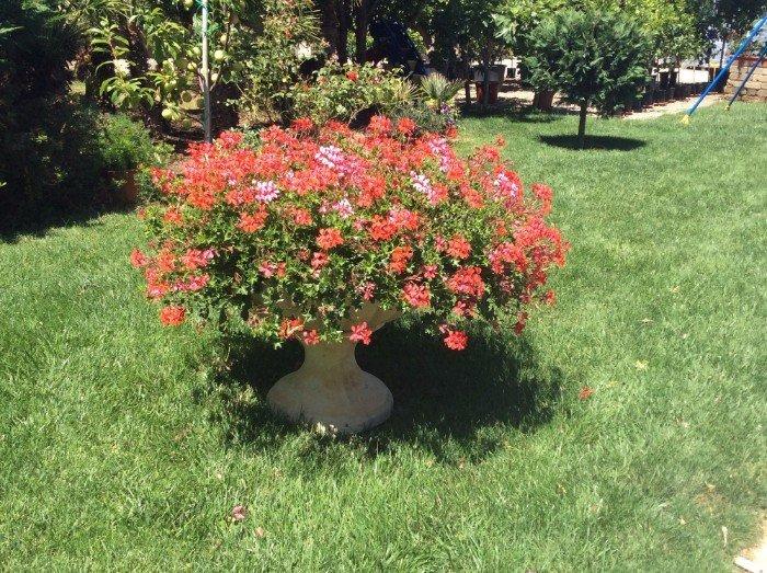 Vaso rotondo pieno di fiori rosse