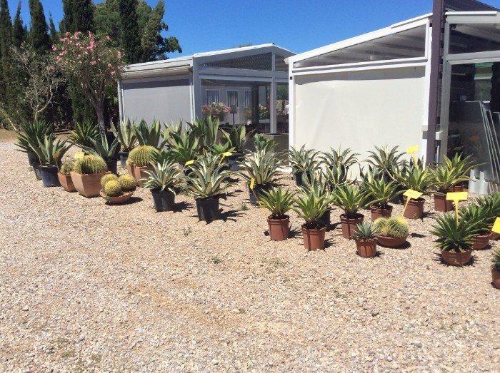 Area del vivaio per l'aloe e i cactus