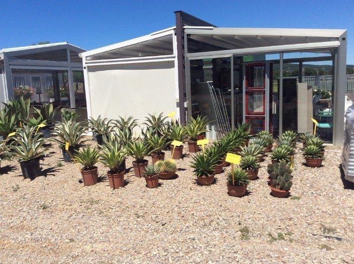 Piante di aloe e cactus alle porte del vivaio