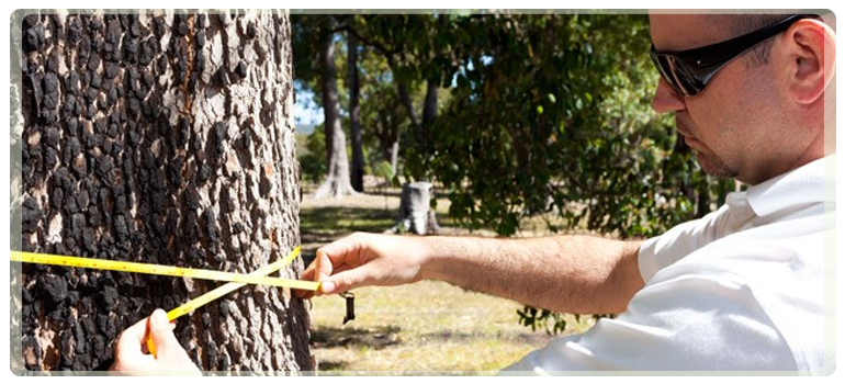 Tree specialist consultancy