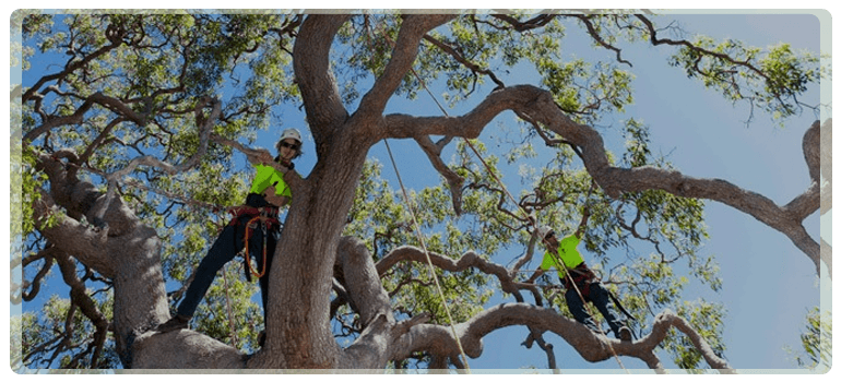 We are a friendly team specialised in trees