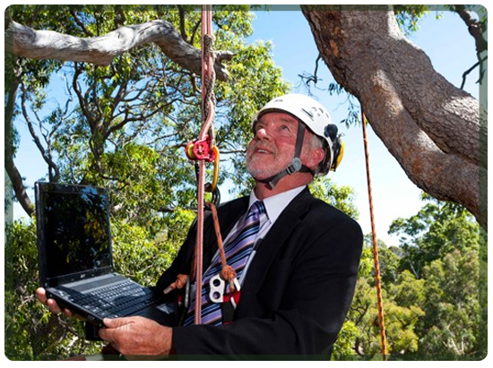 Consultancy on a tree in Perth