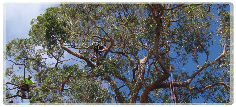 Contact us for the best arborists in Perth