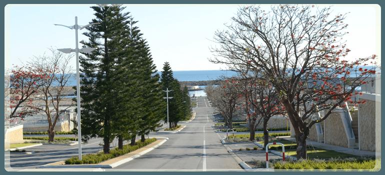 Tree surveys in Perth