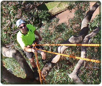 Tree specialist working on a tree in Perth